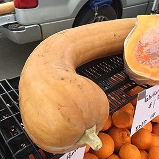 Best tahitian squash seeds Reviews