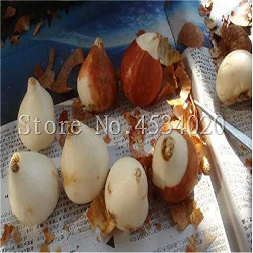 HONIC 10 PC/Beutel Kaffeebohne Flores Bio-Obst plantas Gemüse Refreshing Bonsai-Anlage für Haus und Garten Bonsais planta: 14
