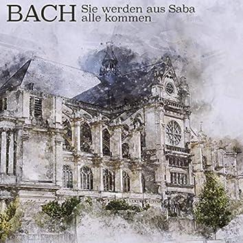 Bach: Sie Werden Aus Saba Alle Kommen