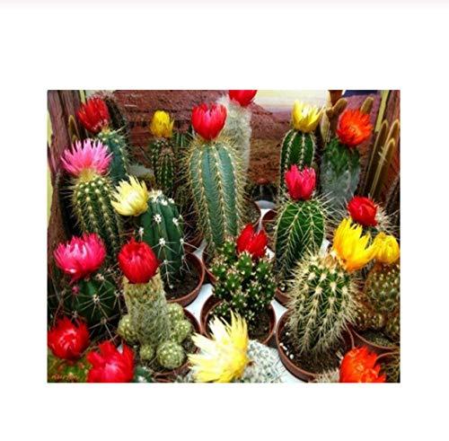 Taladro redondo completo 5D Diy Diamond Painting Blooming cactus diamond Bordado Punto de cruz Decoración de la boda