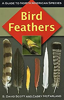 american feathers shop