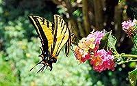 大人のためのCQLFXDパズル1000ピースジグソーパズル古典的な木製の大きなおもちゃの蝶花粉を集めるDiy教育的な知的パズル子供のための楽しい家族向けゲーム