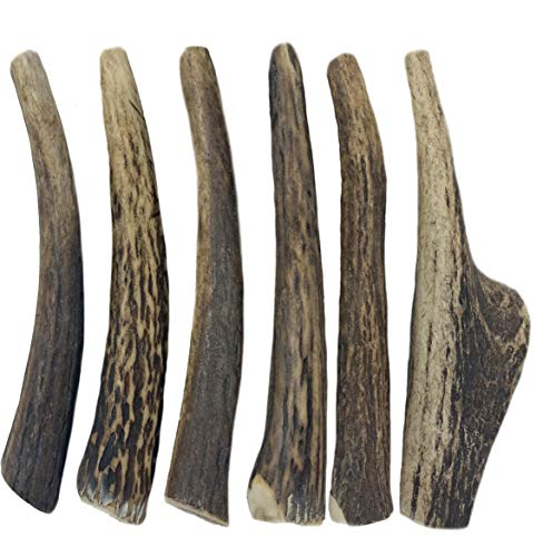 WhiteTail Naturals Premium Organic Red Deer Antlers for Dogs   (6 Pack Medium)   Naturally Shed Antler Horn   5 to 6 Inch Long Natural Dog Chews   for Aggressive Chewers