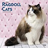 Ragdoll Cats - Ragdoll-Katzen 2020 - 16-Monatskalender: Original BrownTrout-Kalender [Mehrsprachig] [Kalender] (Wall-Kalender)