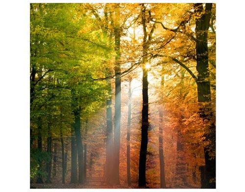 mantiburi Vlies FotoTapete Morning Light Wald 60x60cm