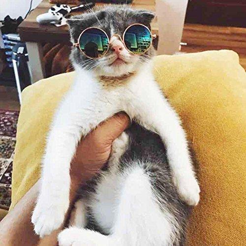 HYGMall 1PC Pet Supplies Nette AC + Metall Haustier Katze Sonnenbrille Super coole Brille Größe Welpen Kätzchen klein für Fotografie Auge Verschleißschutz Weihnachtsgeschenke Sonnenbrille (Blau)
