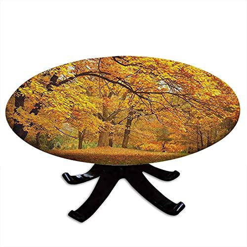 Mantel redondo con bordes elásticos, paisaje de otoño dorado con hojas de arce pálido en el bosque, temporada de noviembre, bosque, para mesas de hasta 62 pulgadas de diámetro, naranja y marrón
