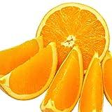 愛媛県愛南町の訳ありネーブルオレンジ10kg