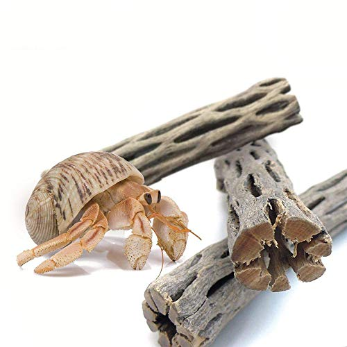 JOR Hermit Crab Log Woods, 5' Inches Long, Climbing Wood, Chew Toy, Stimulating Activity for Little Climbers, Long Dried Terrarium Décor Adds Raw Beauty, 3 Pieces