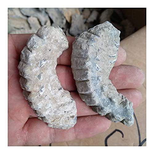 GOSOU Piedra de Tratamiento Paquete de 3 Zipper Oyster Fossil Declaración de...