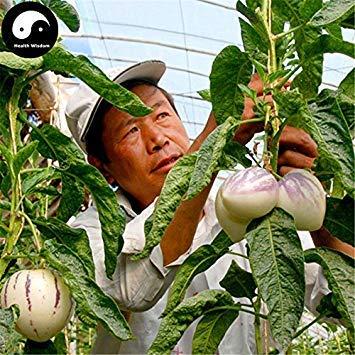 VISTARIC Comprar semillas de melón berenjena de frutas 120pcs planta de ginseng fruta Solanum Muricatum Aiton