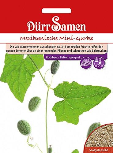 Dürr Samen 4370 Mexikanische Mini-Gurke (Gurkensamen)