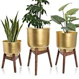 Set of 3 Mid Century Brass Gold Large Planters with Wood Stand, Standing Metal Pot for Fig Tree, Snake Plant & Palm, Tall Floor Tree Planter, Modern Decoration for Living Room, Indoor Decor, NEVT