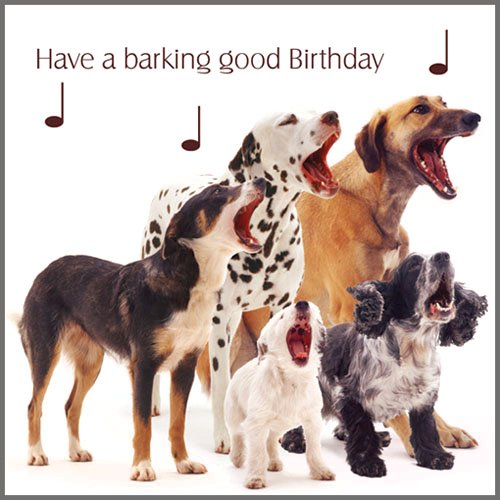 Mixed Dogs Dog Song Birthday Card