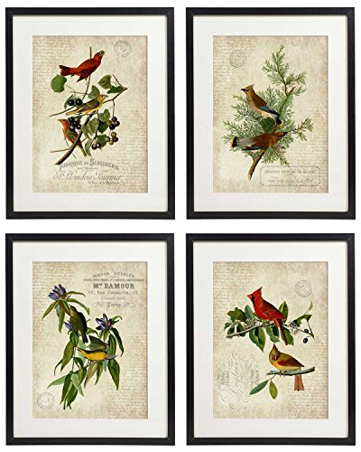 IDIOPIX Vintage Bird & Botanical Home Decor Wall Art Print Set of 4 Prints UNFRAMED No.1