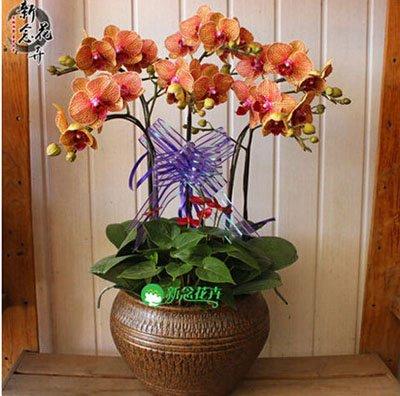 Fleur exotique Orchidée Graines Cattleya Multicolor Papillon Orchidee Bonsai Monoflord Mini jardin plante facile à cultiver 200 pcs/sac 14