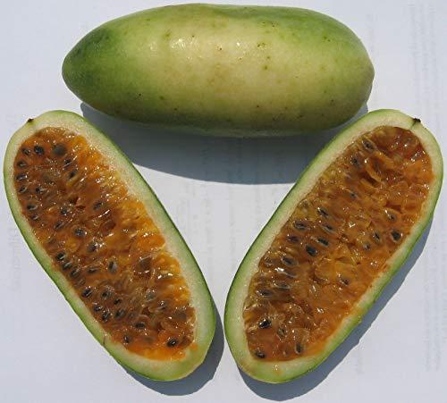 pl/átano fruta de la pasi/ón axos parchas 40 Semillas de Passiflora mollissima curuba poroksas Asklepios-seeds/® tumbos