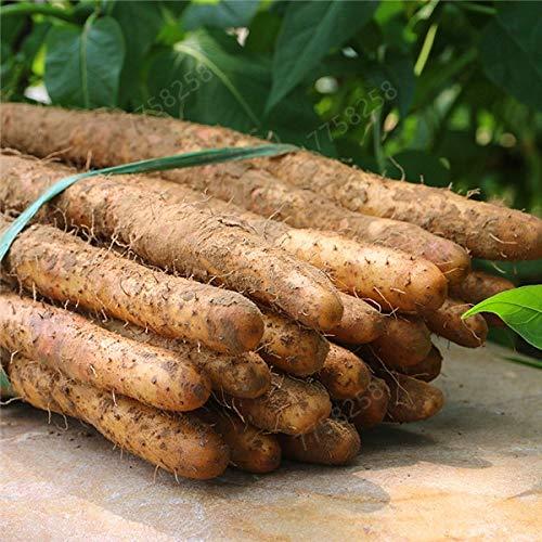 HONIC 100 PC/Bag Chinesische Yamswurzel Bonsai essbare Pflanze zylindrische Wurzel hoch Ernährung gesund grün Bio-Gemüse: 4