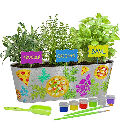 Dan&Darci Paint & Plant Pizza Herb Growing Kit - Grow Basil, Oregano, & Arugula Herbs Garden : Includes Everything Needed to Paint and Grow - Great STEM Gift for Children