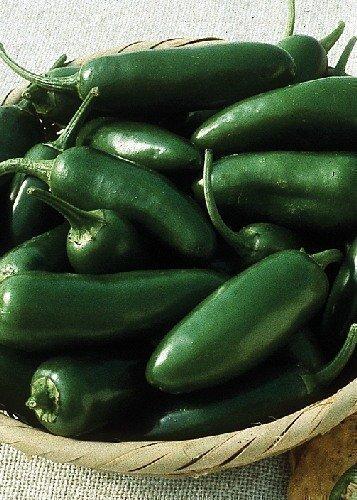 Tropica - Paprika/Chilli - Early-Jalapeno (Capsicum annum) - 10 Samen - Schärfegrad 5 / Sehr hoher Ertrag
