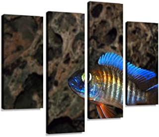 Best pictures of african cichlids Reviews