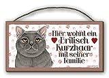 HIER WOHNT - BRITISCH KURZHAAR - HOLZSCHILD thumbnail