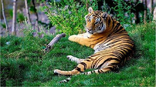 NoNo bruine en zwarte tijger, het groene gras tijdens het dagelijkse malen door cijfers ligt DIY uniek