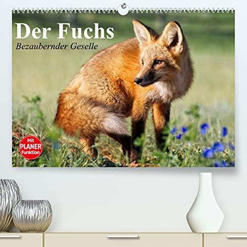 Der Fuchs. Bezaubernder Geselle (Premium, hochwertiger DIN A2 Wandkalender 2022, Kunstdruck in Hochglanz): Fröhliche Rotfüchse beim vergnügten Spiel ... 14 Seiten ) (CALVENDO Tiere)