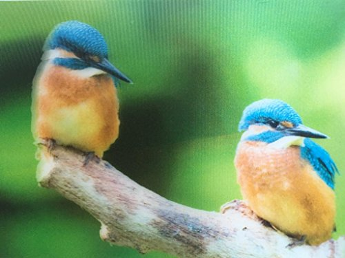 3D Postkarte Wackelbild Eisvögel