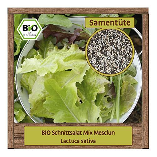 BIO Salat Samen Mix Salatmischung (Lactuca sativa) mit Pflücksalat Eichblattsalat Schnittsalat & Rucola