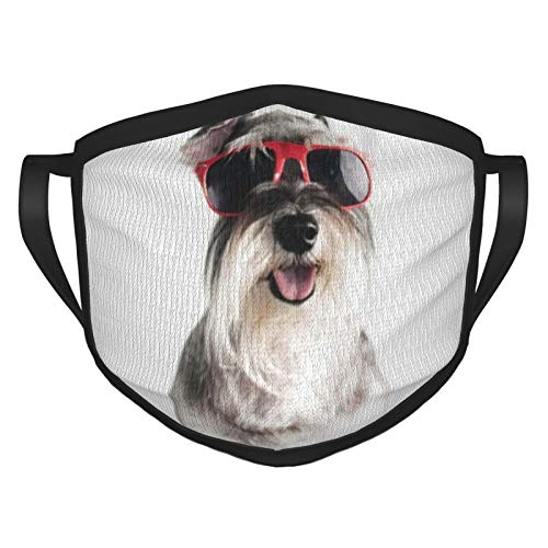 ZVEZVI Feliz, divertido, fresco perro Schnauzer con gafas de sol rojas aisladas en blanco adulto máscara de borde negro, protección facial portátil, bandana, borde elástico, pasamontañas