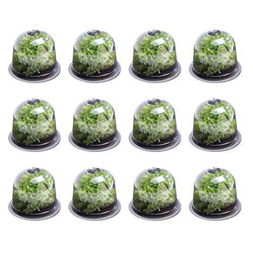 Cloche à salade pour potager