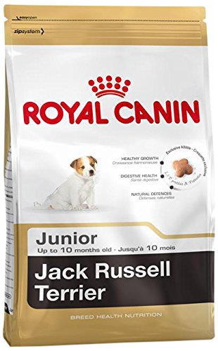 Royal Canin Jack Russel Junior 500 g, 5-pack (5 x 500 g)