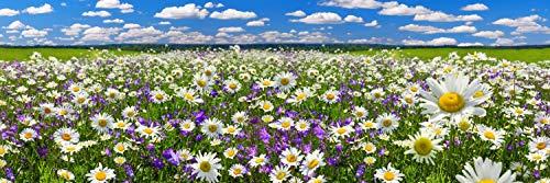 Blumen Wiese Natur Landschaft XXL Panorama Wandtattoo Poster Aufkleber W0086 Größe 300 cm x 100 cm