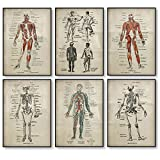 DLFALG Conjunto de póster con estampado de anatomía, esqueleto médico, cuerpo humano, músculo, póster vintage, ciencia, educación, cuadro artístico de pared, decoración médica, 40x50cmx6 sin marco