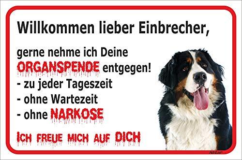 AdriLeo Schild - Vorsicht Berner Sennenhund - Willkommen Lieber Einbrecher - (20x30cm) / Achtung Hund Wachhund