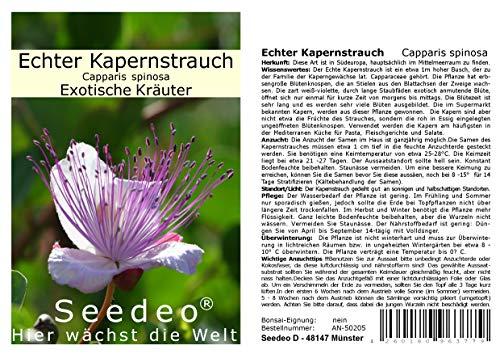 Seedeo Echter Kapernstrauch (Capparis spinosa) 50 Samen