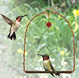 Songbird Essentials Sehhhums Copper Hummingbird Swing, Set of 1