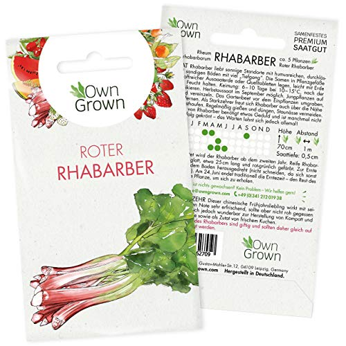 Rhabarber Pflanzen Samen: Premium Roter Rhabarber Samen für 5 Rhabarberpflanzen – Rhabarber Pflanzen mehrjaehrig – Rhabarber Pflanze winterhart – Samen Rhabarber und Obst Samen – Rhubarb von OwnGrown