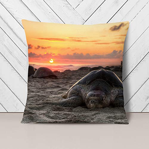 Big Box Art Cushion and Cover - Turtle Sunset Beach Seascape - Single Square Throw Pillow - Soft Faux Suede Material - Double-sided - 40x40 cm