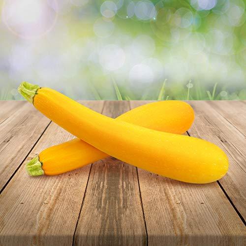 gelbe Zucchini 25 x Samen aus Portugal 100{da5fba0269ab18845558667b771d338b168af33536706a026609772f733cab80} Natur/Massenträger ideal zum Grillen und Einlegen echter Hingucker