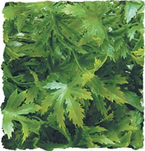 Zoo Med BU-36 Cannabis Kunststoffpflanze, Large Dekoration und Versteckmöglichkeit im Terrarium