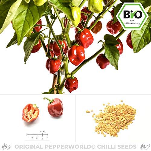 Pepperworld Red Savina Bio Chili-Saatgut, 10 Korn, Chili-Schote zum Anpflanzen, extrem scharf