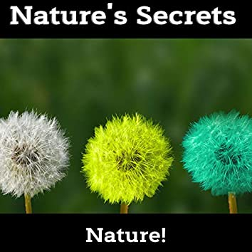 Nature's Secrets - Calming Music