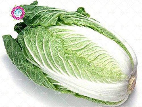 100pcs/sac graines de chou chinois graines végétales végétales naturelles de légumes bio pour le jardin de la maison facile à cultiver