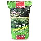 Semi Giardino Sementi per Prato Ombreggiato Resistente Blumen 5 Kg - Copertura 250 Mq - Tappeto Erboso Persistente - Resistente al calpestio