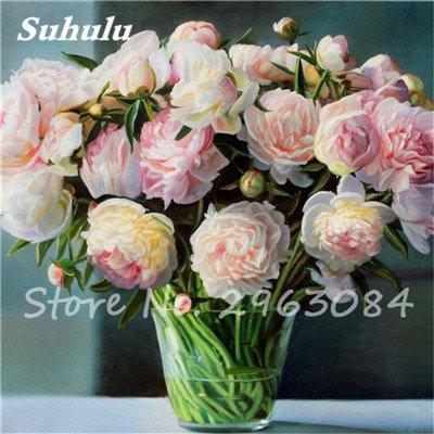 Verkauf 10 PC/bag Rare Farbe Pfingstrose Samen Erbstück Sorbet Robust Peony Bonsai Blumensamen-Topf Baum-Pfingstrose-Blumensamen Gartenpflanze 4