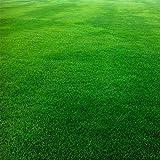 Mothcattl Festuca - Semillas de arundinacea | campo de fútbol campo de golf césped (10000 piezas), Semilla, Festuca Arundinacea Seeds
