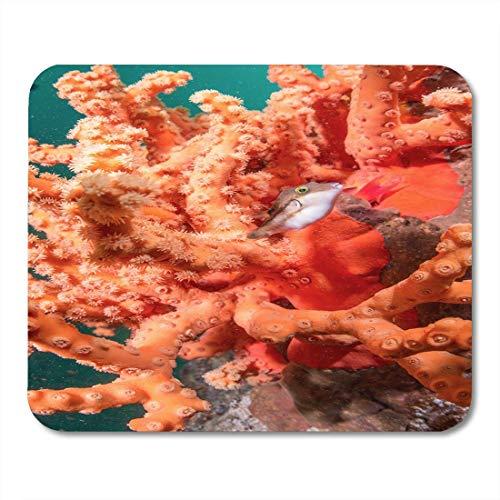 Mauspads? Aare Aare Orange Coral Animal Anthozoa Aquarium Atlantik Aurea Karibik Mauspad für Notebooks, Desktop-Computer Mausmatten, Büromaterial