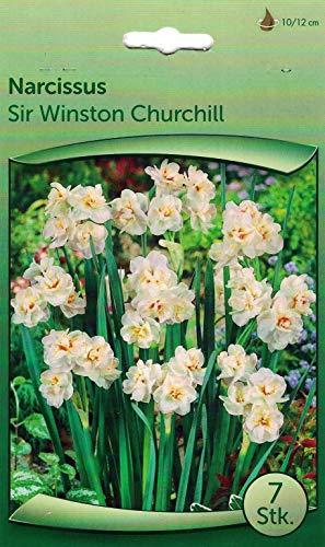 """35 Zwiebeln Narzissen\""""Sir Winston Churchill\"""" weiß - seperat verpackt - wunderschön, einfach, natürlich"""
